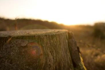 4ALUVYYlQLC004zkGhd9_Sunset_at_Windermere_stump